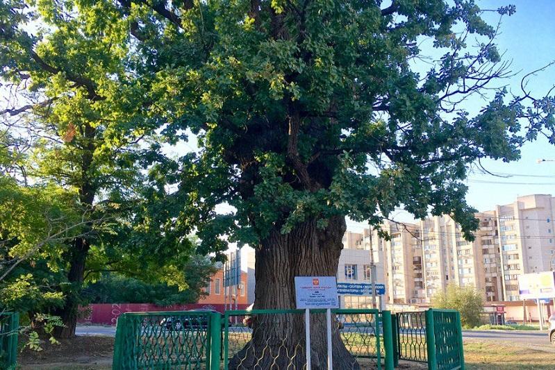 Петровский дуб, Астраханский дуб, Петр Первы