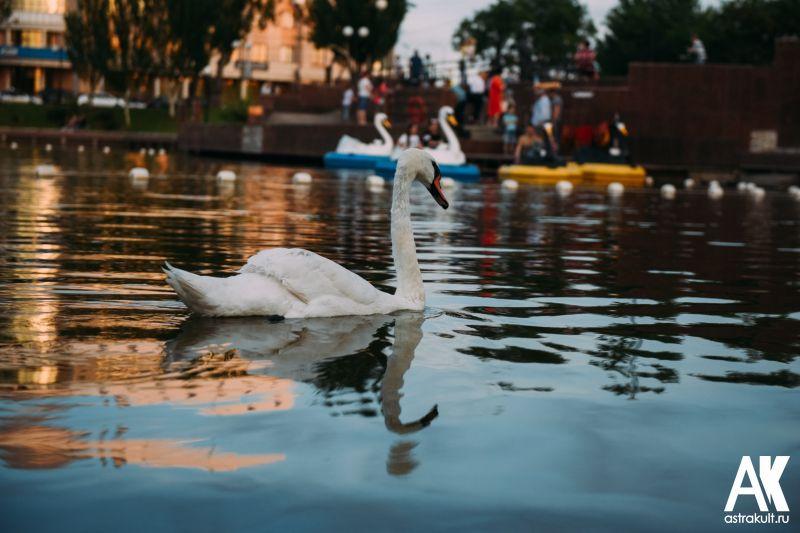 Лебединое озеро в Астрахани